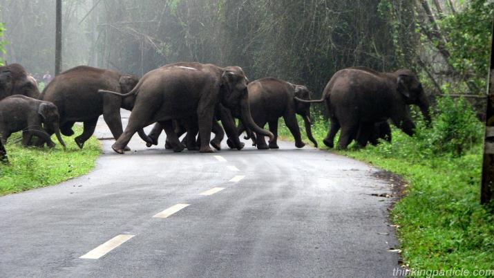 Bengaluru - Mysore - Coorg - Wayanad: 6 Nights / 7 Days -By Car